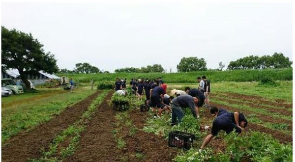 The Silver-hair Farm is a place for the elderly and those who are interested in agriculture